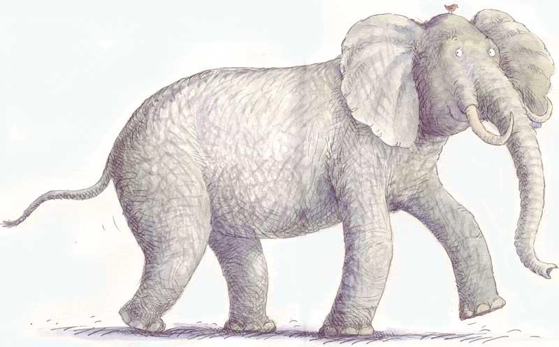 An Elephant Walks - size: 330 x 210