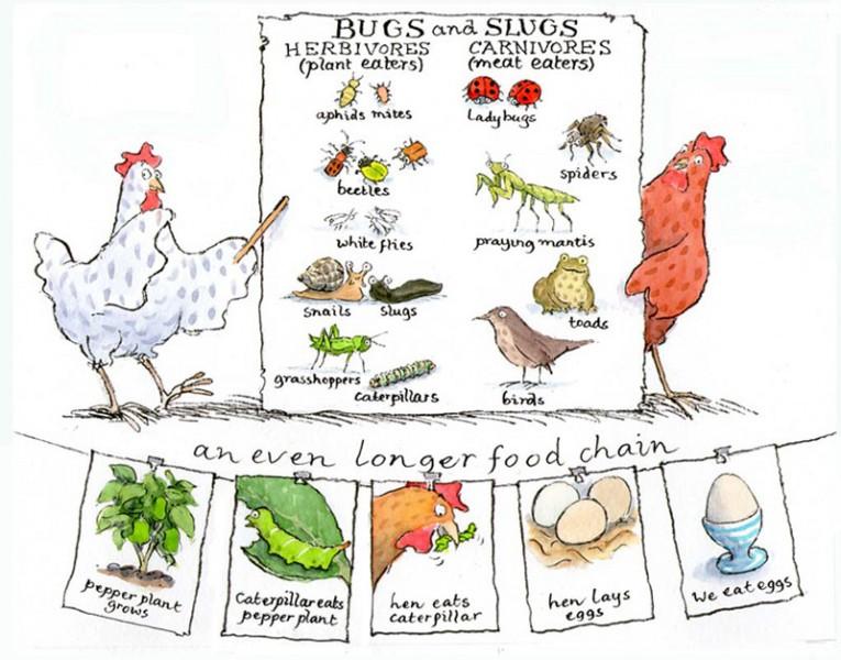 Bugs n Slugs - size: 240 x 200